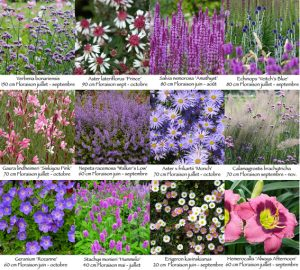 Perennials for a border in full sun in well-drained soil