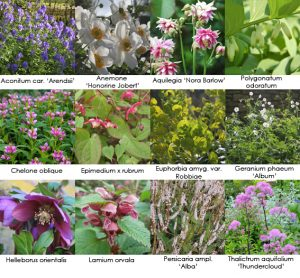 Perennials for your (half) shady border