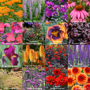 Create a 'hot border' with dahlias and perennials!!!